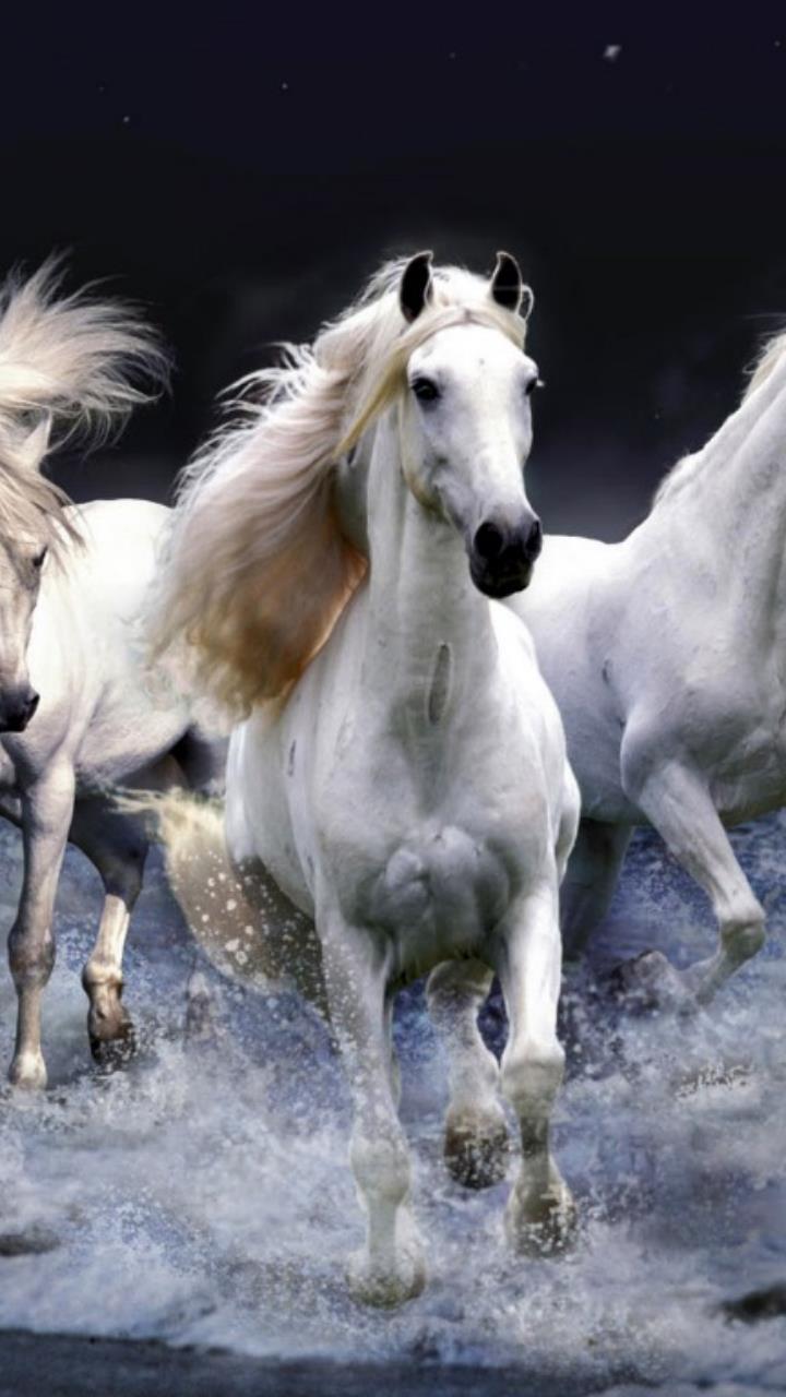 White Horses Running Wallpaper Hd Mobile Desktop Wallpaper