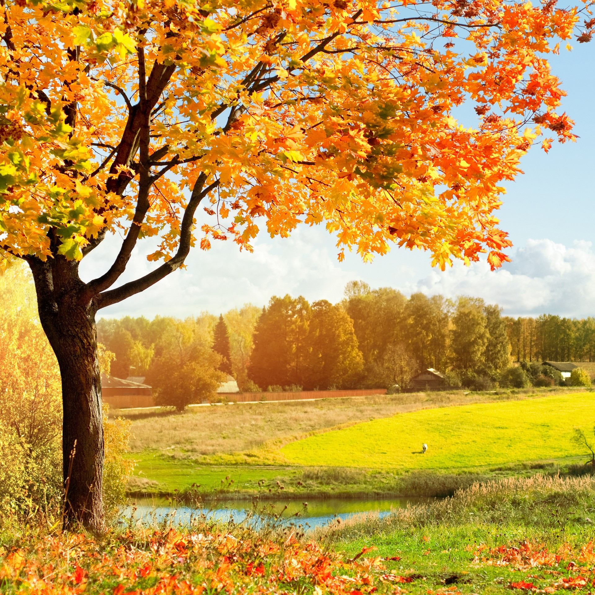 Amazing colorful Autumn Landscape wallpaper for Desktop