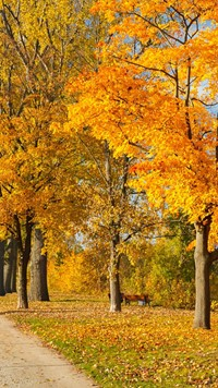 Autumn tree park colorful wallpaper