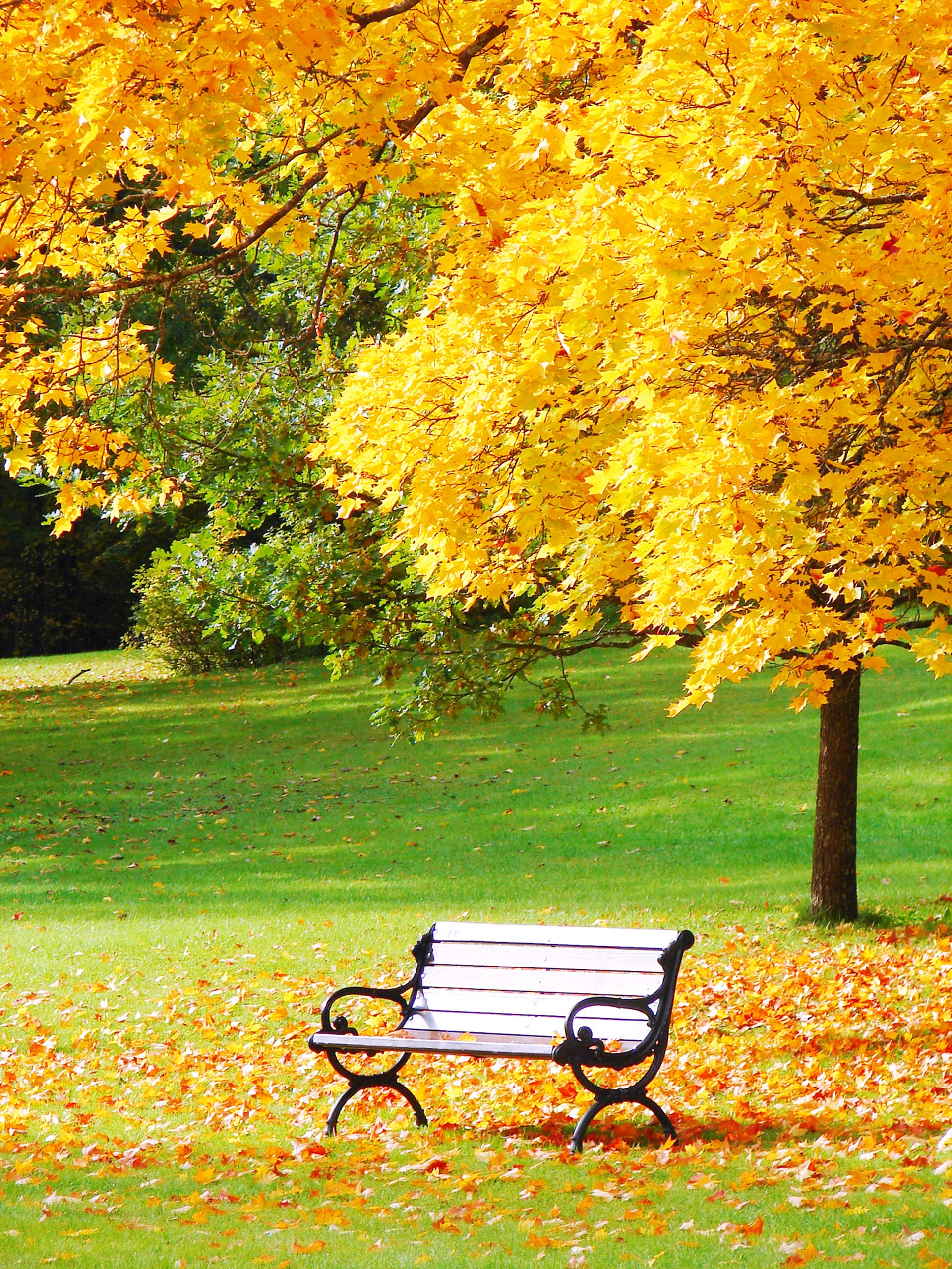 Beautiful Autumn landscape with single bench wallpaper for Desktop