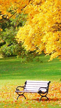 Beautiful Autumn landscape with single bench wallpaper