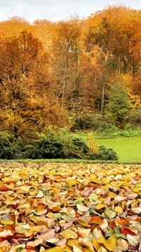 Colorful Autumn leafs Wallpaper Landscape