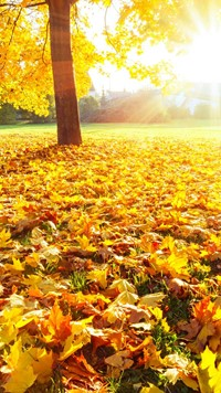 Colorful Autumn leafs shining under Sunlight Wallpaper