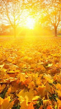 Red Sun Shining Autumn leafs wallpaper