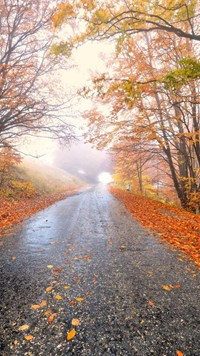 Forest Road beautiful wallpaper