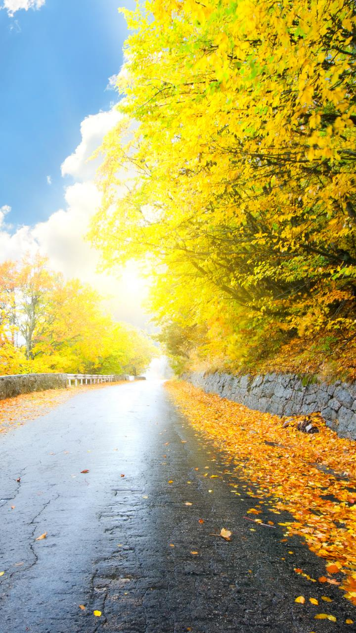 Forest road yellow tree with sun beautiful wallpaper for Mobile Phones