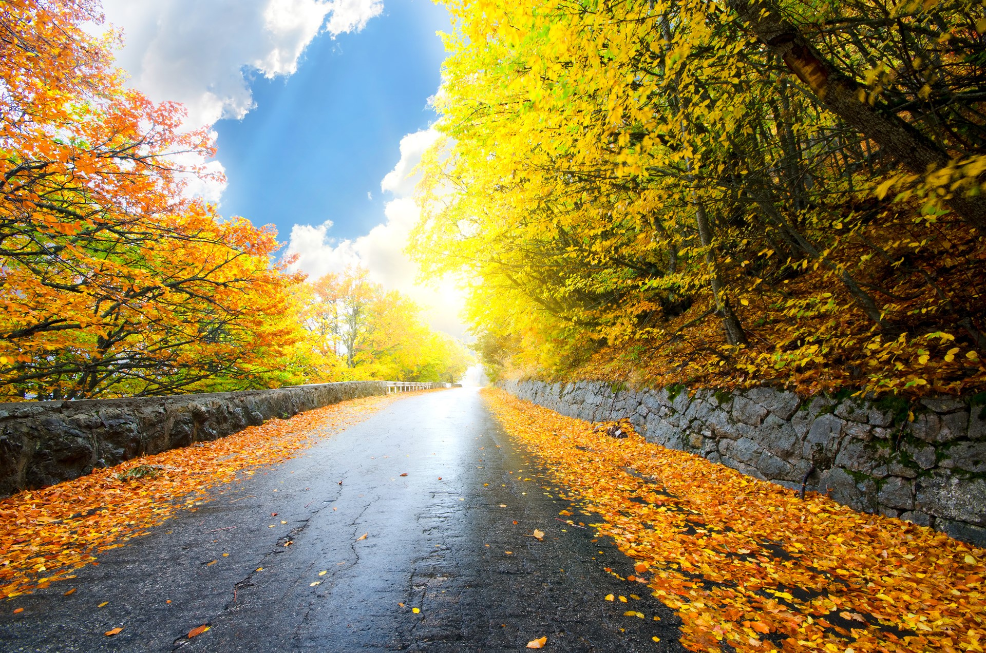 Forest road yellow tree with sun beautiful wallpaper for Desktop