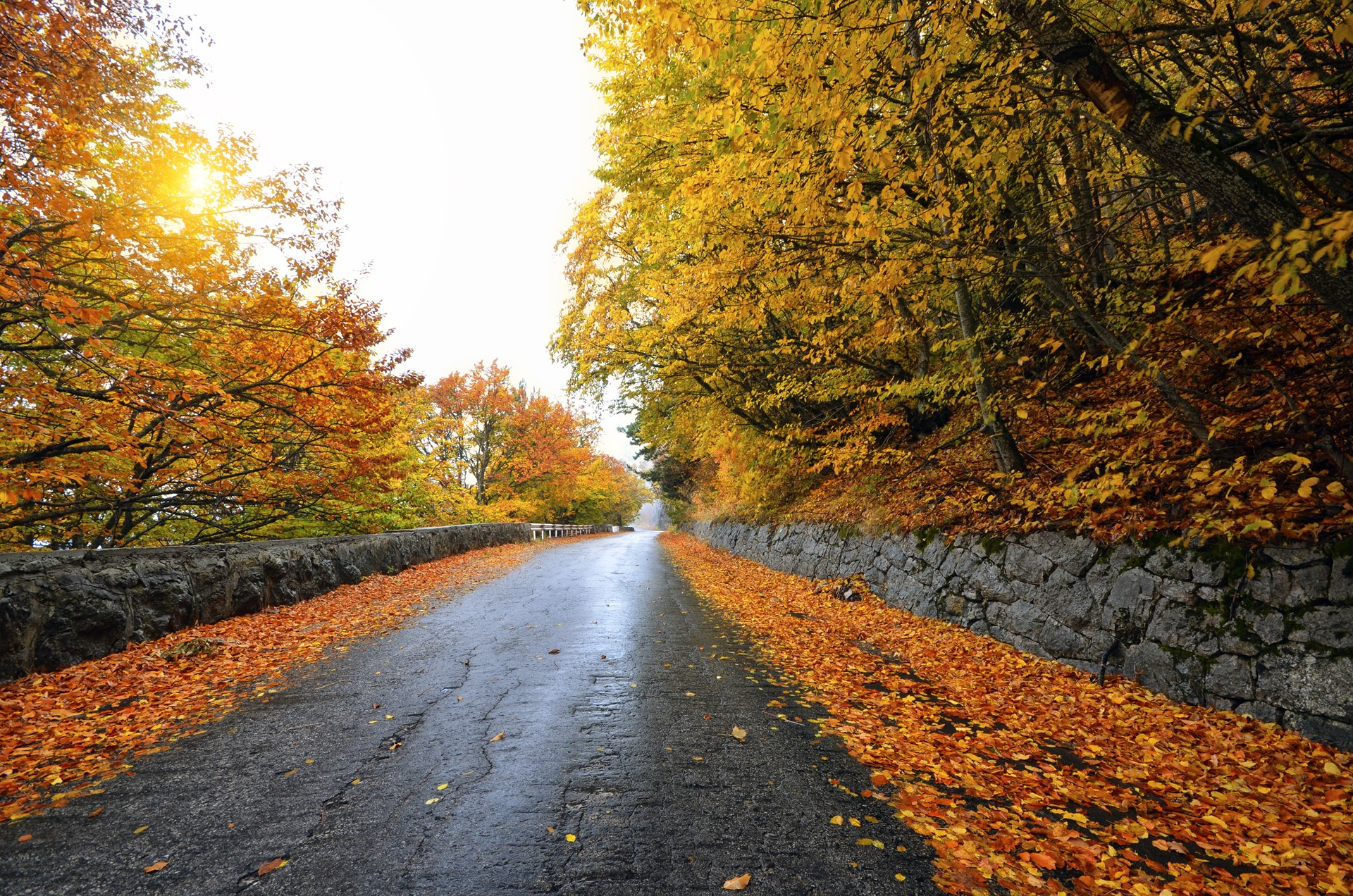 Forest road yellow trees side by side beautiful wallpaper for Desktop