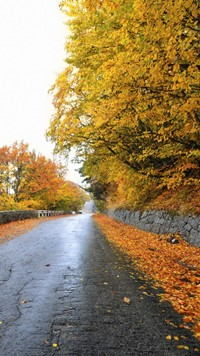 Forest road yellow trees side by side beautiful wallpaper