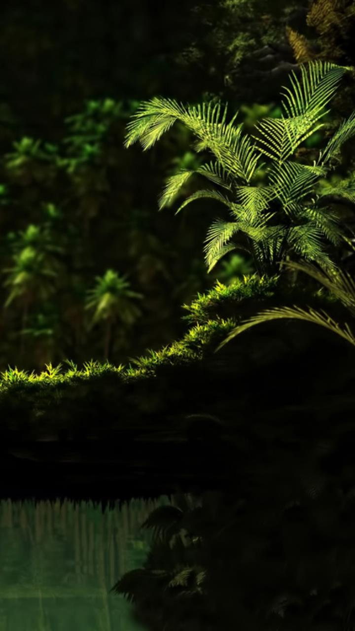 green plant dark shadow forest wallpaper for Mobile Phones