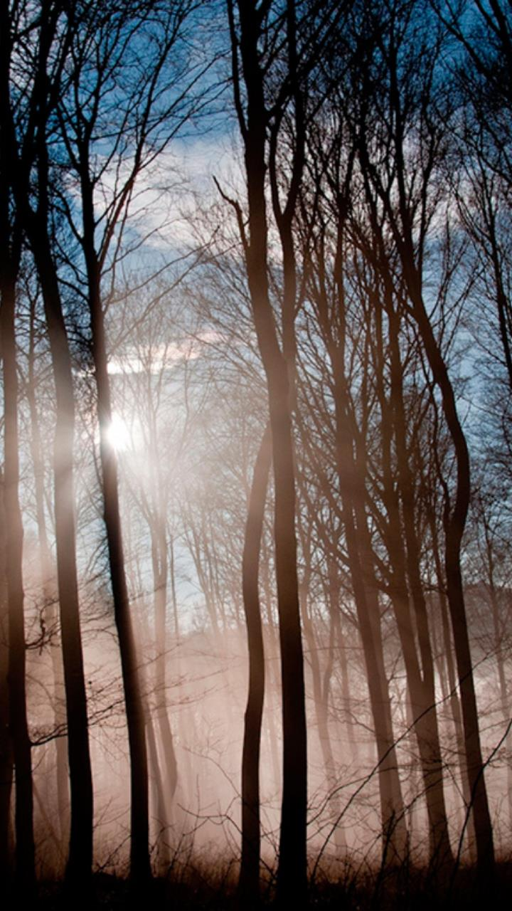 sun shine in deep forest wallpaper for Mobile Phones