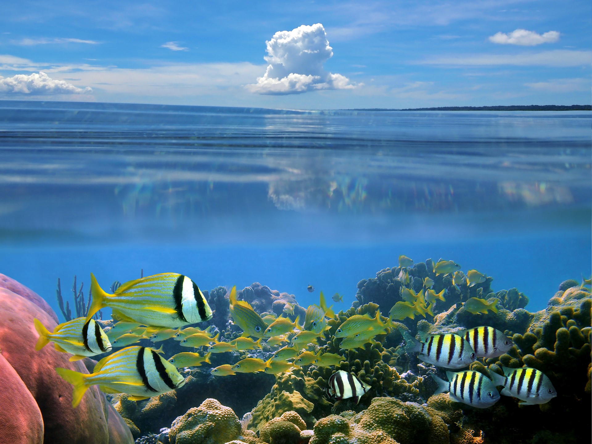 Australian beach with cloud and under water fishes wallpaper for Desktop