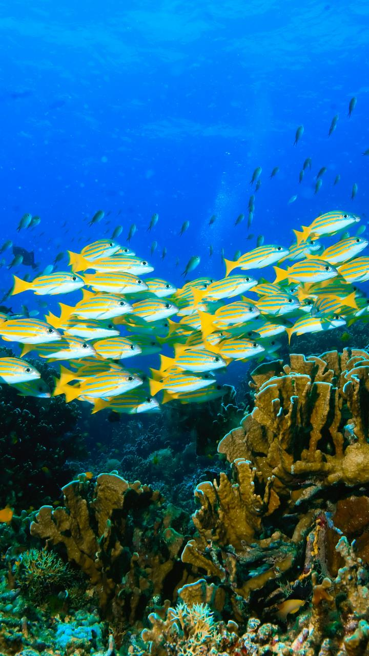 Fish Gathering Under Water 4k Wallpaper Hd Mobile Desktop Wallpaper