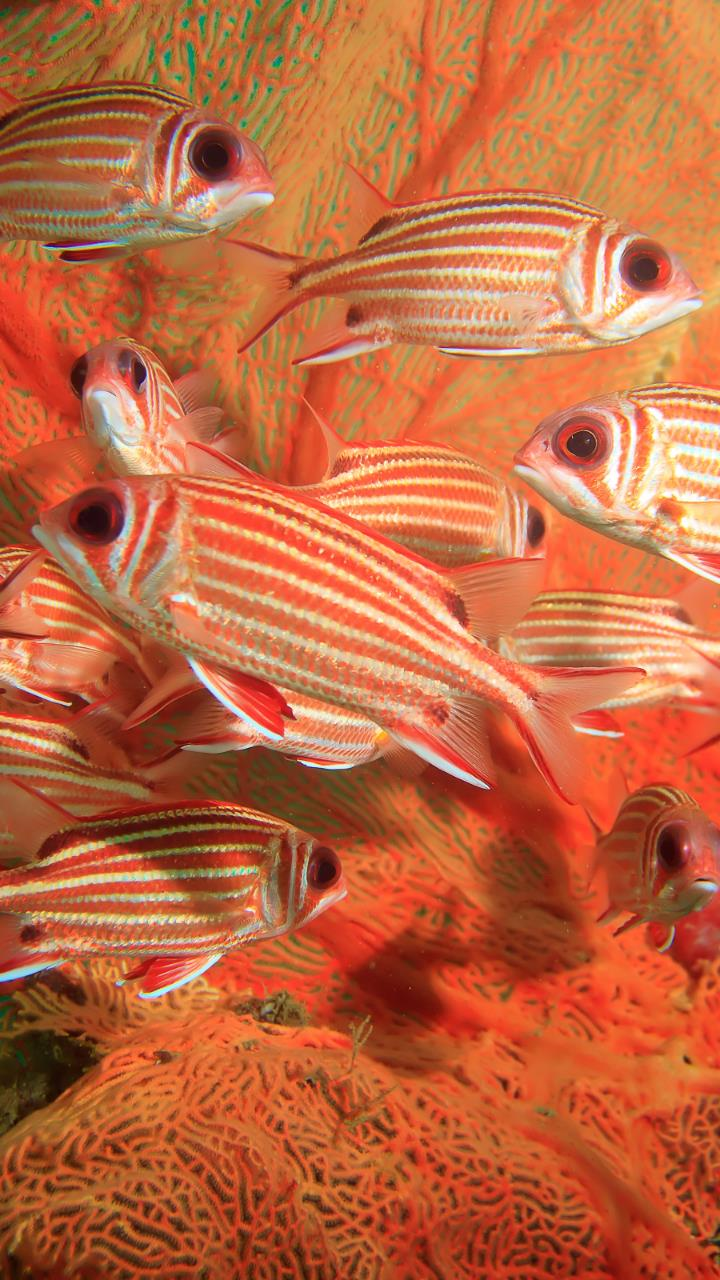 SouthAfrican orange white fish under water Wallpaper for Mobile Phones