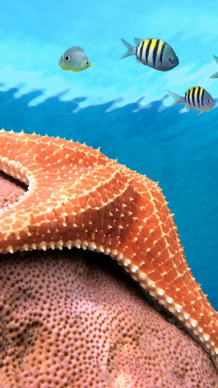 Star fish on stone under water wallpaper for Mobile Phones