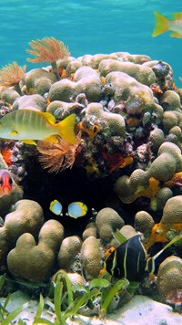 Yellow Fish under water Africa Wallpaper